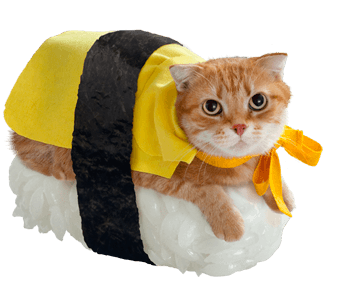 Chat sushi